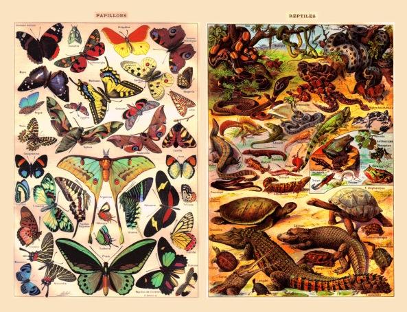 fg-papillons-et-reptiles