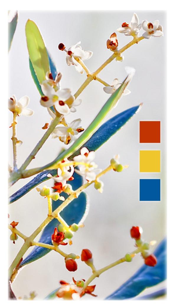 fg-spring-color-sample